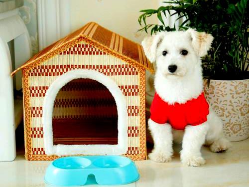 第三方检测机构宠物用品的测试产品和项目